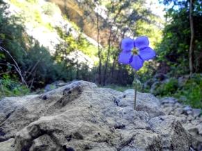 Parc-naturel-de-la-Sierra-et-des-gorges-de-Guara-fleur-1