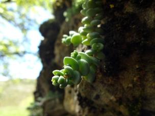 Parc-naturel-de-la-Sierra-et-des-gorges-de-Guara-plante-5